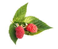 Raspberry Royalty Free Stock Photos