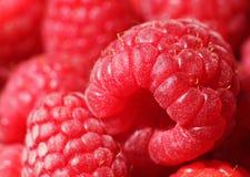 Raspberry. Close up of ripe raspberry Stock Photos