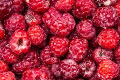 Raspberry Stock Photography