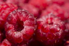 Raspberry Royalty Free Stock Image