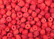 Free Raspberry Royalty Free Stock Photo - 25397295