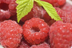 Raspberry. Fruit close up  on white background Royalty Free Stock Photos