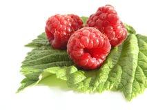Raspberry royalty free stock photos