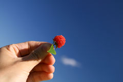 Raspberry. Sweet red raspberry and leaves in the hand, background cloudly sky, Rubus idaeus royalty free stock photo