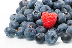 Raspberry against pile of blueberries Royalty Free Stock Photos