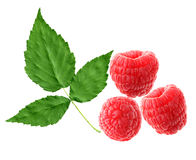 Free Raspberry And Leaf Stock Images - 6393554