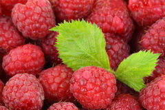 Raspberry Background. Fresh raspberry background with a green leaf Royalty Free Stock Photo