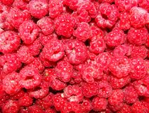 Raspberry  background. Red fresh raspberry  for background Royalty Free Stock Photography