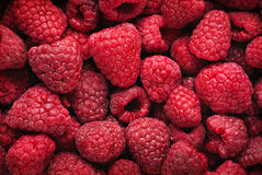 Raspberry background. Fresh red berries. Raspberry fruits horizontal background Stock Images