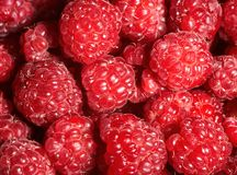 Raspberry background Royalty Free Stock Images