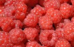 Raspberry background Stock Photography
