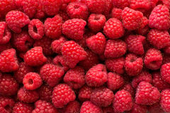 Raspberry background Royalty Free Stock Photo