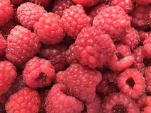RASPBERRY BACKGROUND. Fresh raspberry background and texture Stock Photography