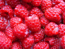 Raspberry. Background from a raspberries closeup Stock Images