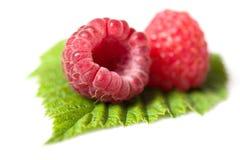 Raspberry background Stock Image