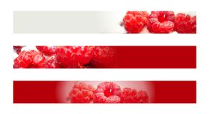 Raspberry banner Stock Photography