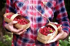 Raspberry  basket in holding hands on the garden background. Fresh ripe raspberry  in basket in holding hands on the garden background Stock Images