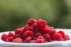Raspberry basket / raspberry bush branch / growing raspberries Stock Photo