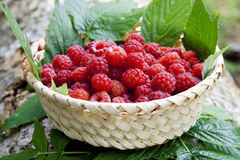 Raspberry basket. Ripe raspberries placed in baskets with raspberry leaves, sweet berry fruits Stock Photos