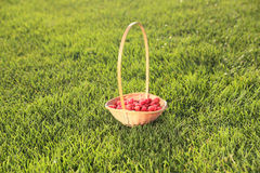 Raspberry basket Stock Images