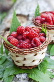 Raspberry Baskets Royalty Free Stock Photos