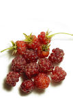 Raspberry. Beautiful sweety raspberry. Garden. food Royalty Free Stock Image