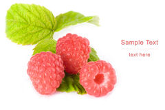 Raspberry berries Stock Photography