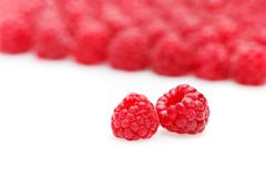 Raspberry berries isolated on white. Natural raspberry berries isolated on white background. copy space Stock Photography