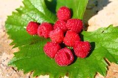 Raspberry berry paradise. Raspberry berry leaf freshness summer tasty red juicy life royalty free stock photos