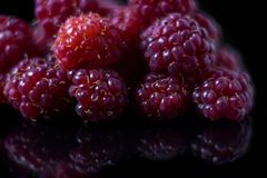 Raspberry on black background royalty free stock image