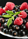 Raspberry on black currant Stock Photos