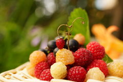 Raspberry, black currant and one strawberry Royalty Free Stock Photo