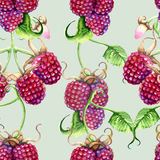 Raspberry and blackberries on a branch. Isolated on white background vector illustration