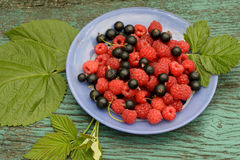 Raspberry and blackberry. On a blue plate Stock Images