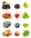 Raspberry, Blackberry,Blueberry and Hazelnuts. Summer berry fruits. Raspberry, Blackberry,Blueberry and Hazelnuts Isolated on White Background Royalty Free Stock Photo