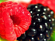 Raspberry and blackberry Stock Image