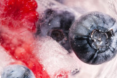Raspberry and blackberry frozen in ice sticks Royalty Free Stock Image