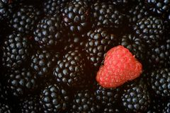 Raspberry and blackberry Royalty Free Stock Photography