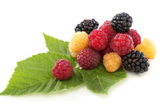 Raspberry and blackberry. Royalty Free Stock Images