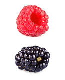 Raspberry blackberry Stock Image
