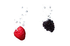 Raspberry and blackberry in water with air bubbles. Raspberry and blackberry falling into water, with air bubbles, in front of white background, union of the royalty free stock images