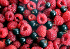 Raspberry and blackcurrant Stock Images