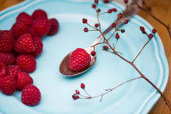 Raspberry on blue plate Stock Images