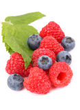Raspberry and Blueberries. Ripe raspberry and Blueberries with leaf, on white Stock Photography