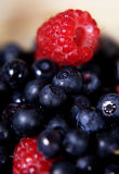 Raspberry and blueberry. Fresh forest raspberry and blueberry, focus on raspberry Royalty Free Stock Images