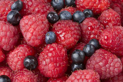 Raspberry and blueberry background. Fresh raspberry and blueberry background Royalty Free Stock Images