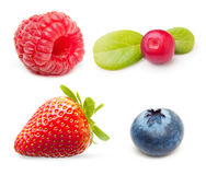 Raspberry and blueberry isolated Stock Images