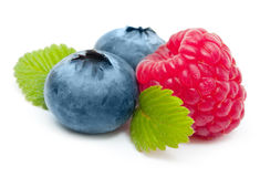 Raspberry and blueberry isolated Stock Image