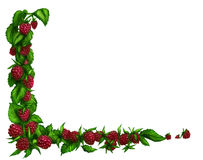 Raspberry border. Raspberry or blackberry hand drawn border. Pencil drawing, colored Stock Photo