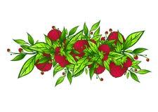 Raspberry Stock Photos